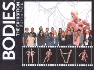 A field trip to the Bodies Exhibition