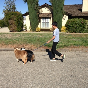 I got a new job of walking dogs every time after my off ice training.